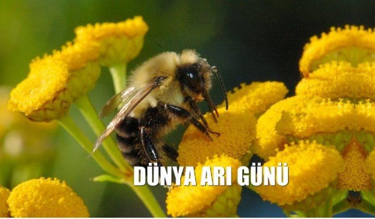 20 Mayıs Dünya Arılar Günü!